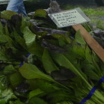 Great Greens from Min Hee Garden