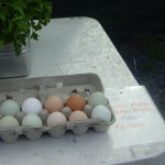 Eggs that come already colored