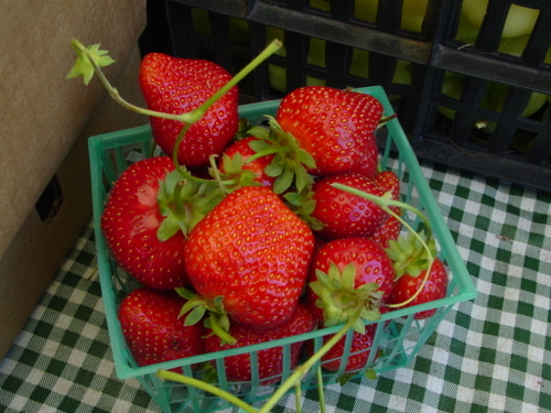 Beautiful and so good Strawberries from Armstrong Valley Farm