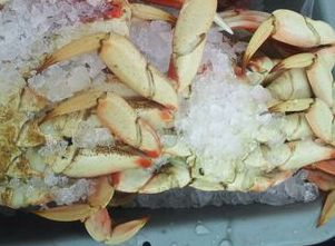 Anello's will have fesh, local crab