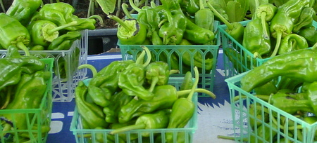 Padron Peppers are widely available at the markett
